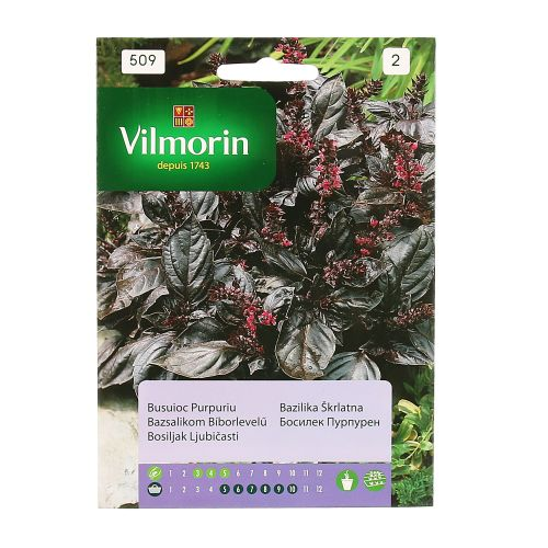 Seminte busuioc purpuriu Vilmorin 0.5g