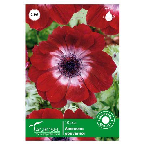 Bulbi anemone Gouvernor starsem 10 bucati