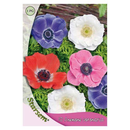 Bulbi anemone mixt