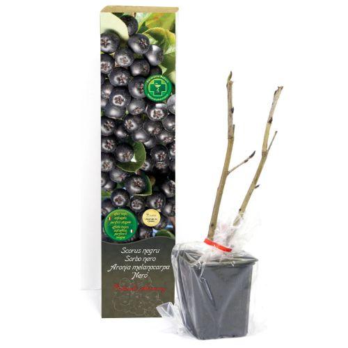 Arbusti fructiferi premium diverse sortimente