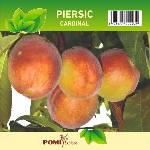 Pom fructifer piersic
