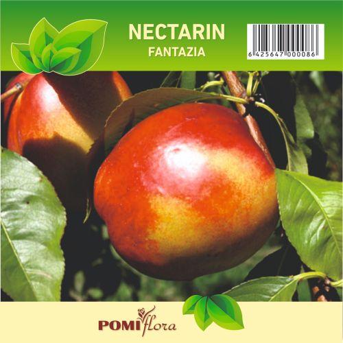 Pom fructifer nectarin