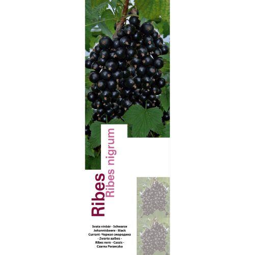 Butasi fructe de padure