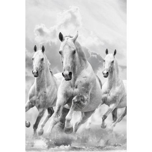 """Canvas 60 x 90 cm, """"Wild Horses"""""""
