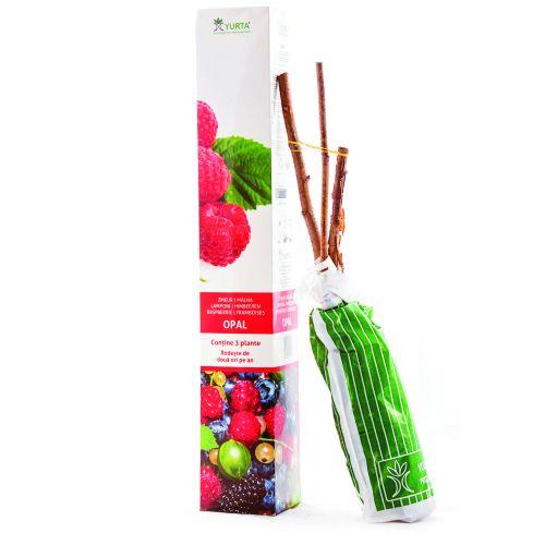 Arbusti fructiferi xxl