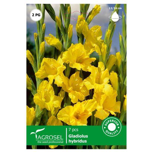 Bulbi gladiole galben, agrosel, 7 buc