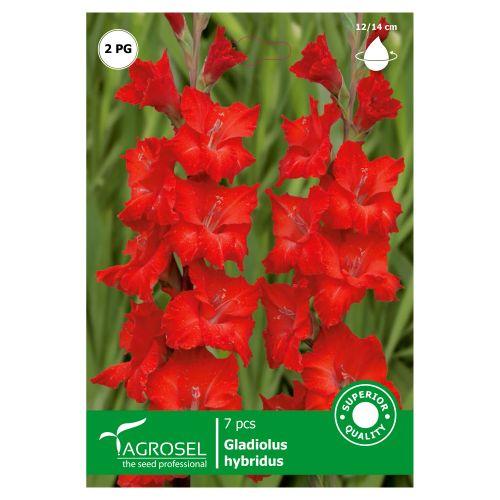 Bulbi gladiole rosii, agrosel, 7 buc