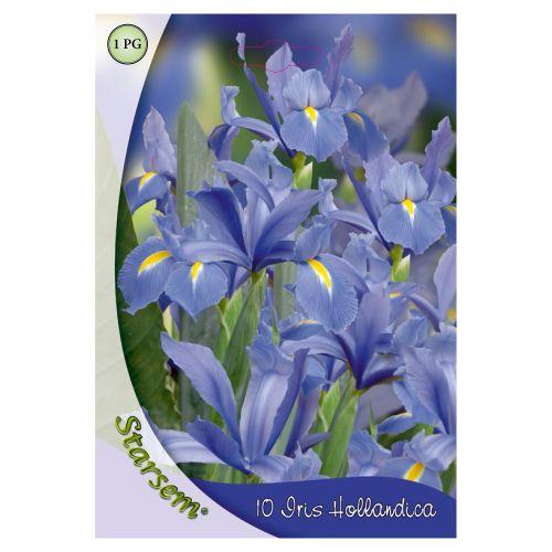 Bulbi iris albastru pitic, starsem, 10 buc