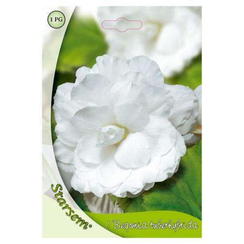 Bulb begonia alb, starsem, 1 buc
