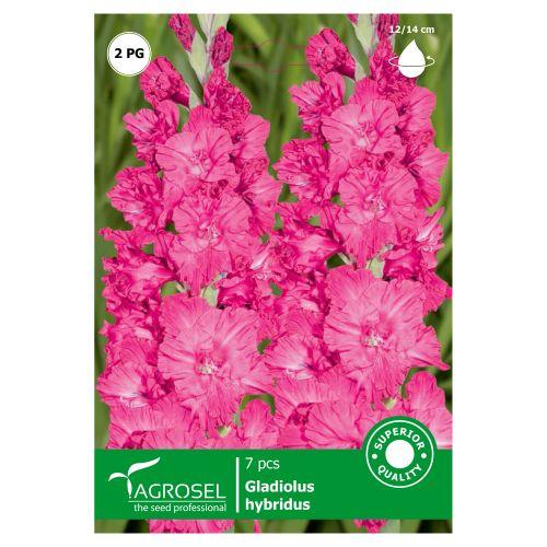 Bulbi gladiole roz, agrosel, 7 buc