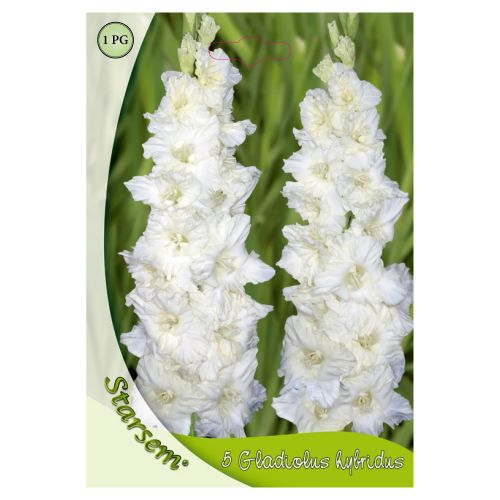Bulbi gladiole albe, starsem, 5 buc