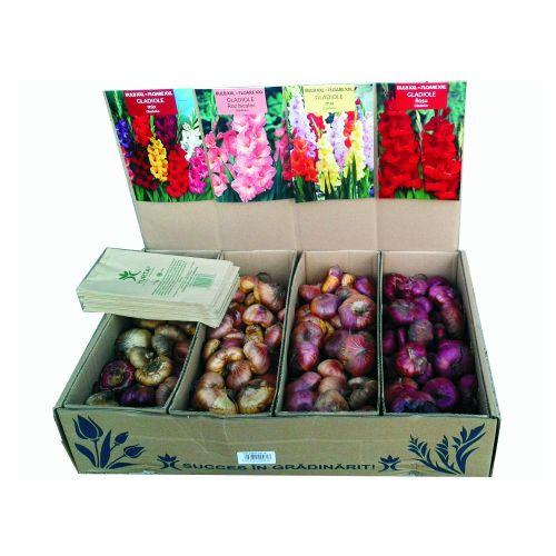 Bulbi gladiole vrac, xxl, yurta