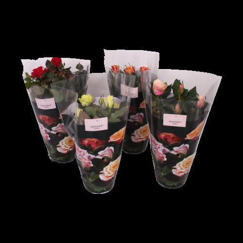 Rosa diverse culori, ghiveci Ø13